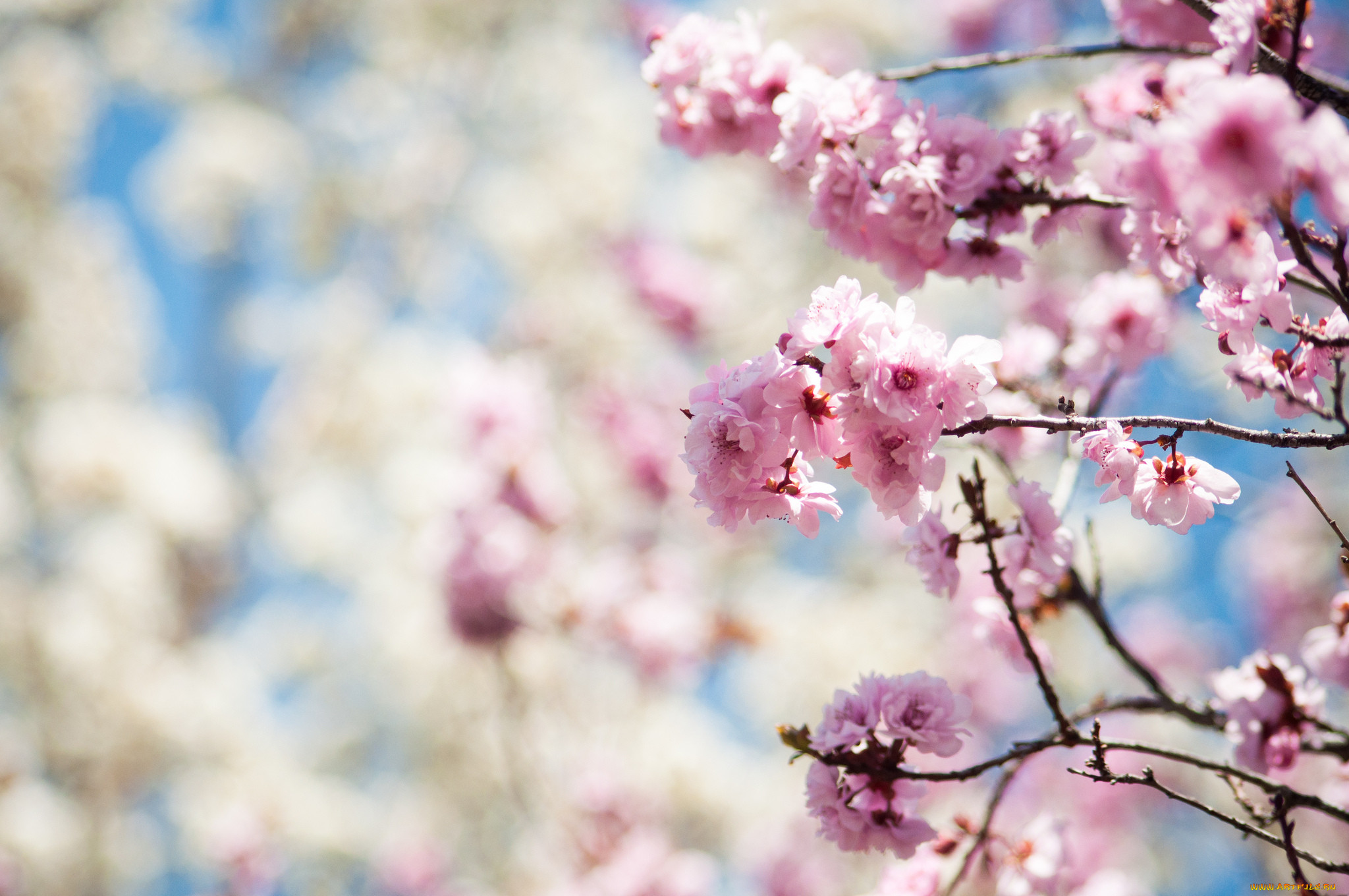 Цветы цветущие деревья кустарники